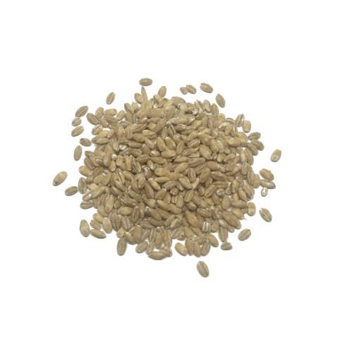 Cebada en grano Eco (10gr)
