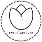 Paquete de Flores Frescas